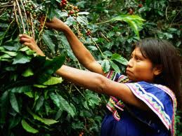Geisha Coffee Panama Price